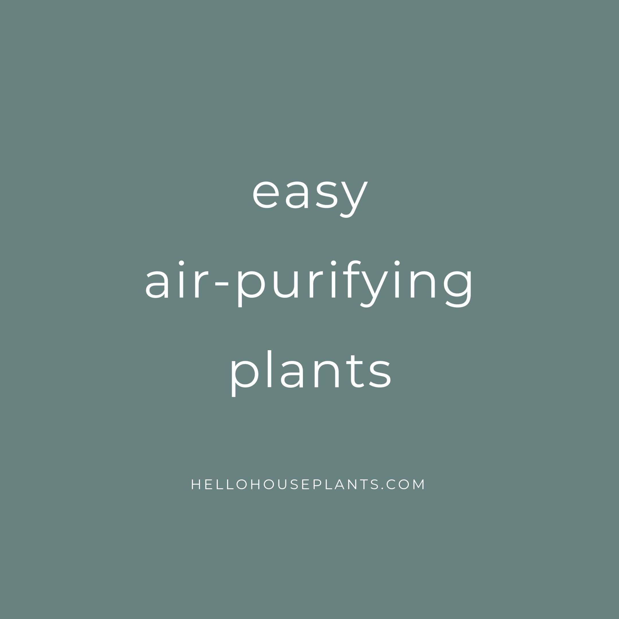 easy air purifying plants