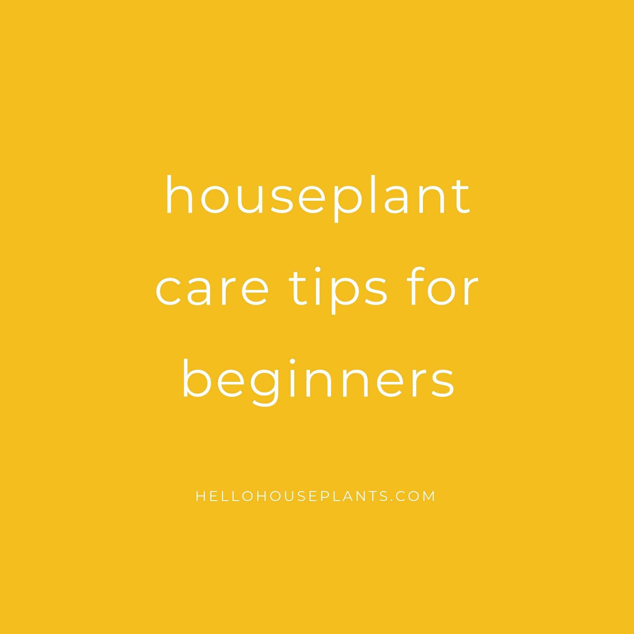 Houseplant Care Tips for Beginners